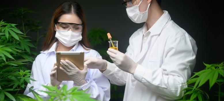 concept-of-cannabis-plantation-for-medical-cannabidiol-experiment-analysis-cannabis-biotechnology_t20_kzLQ4E
